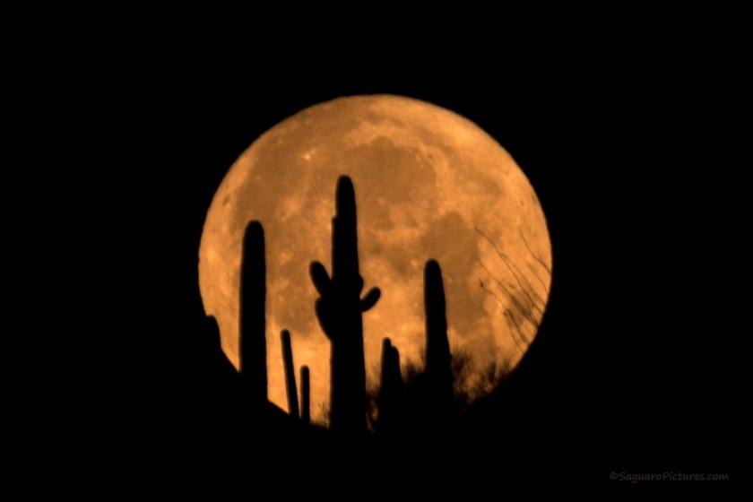 Sacred Beauty Super Moon